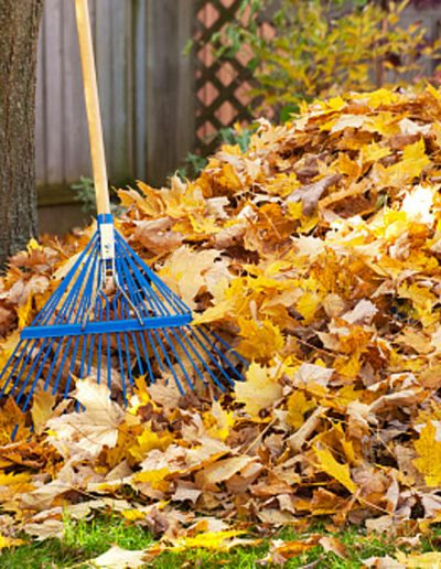 yard-cleanups-in-utah-professional