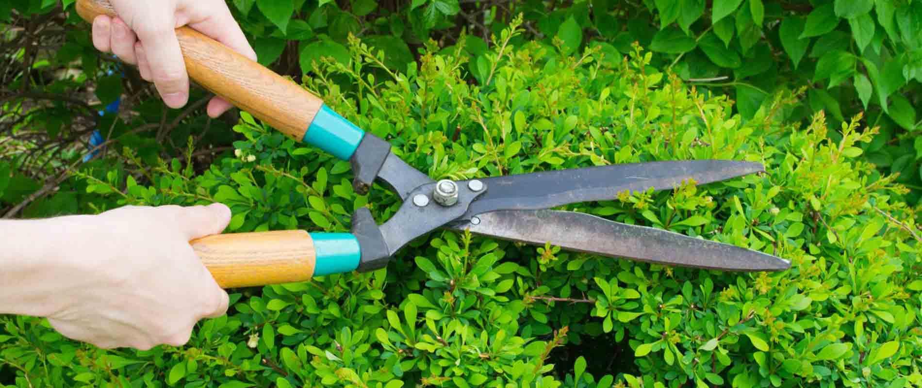 best-pruning-service-utah