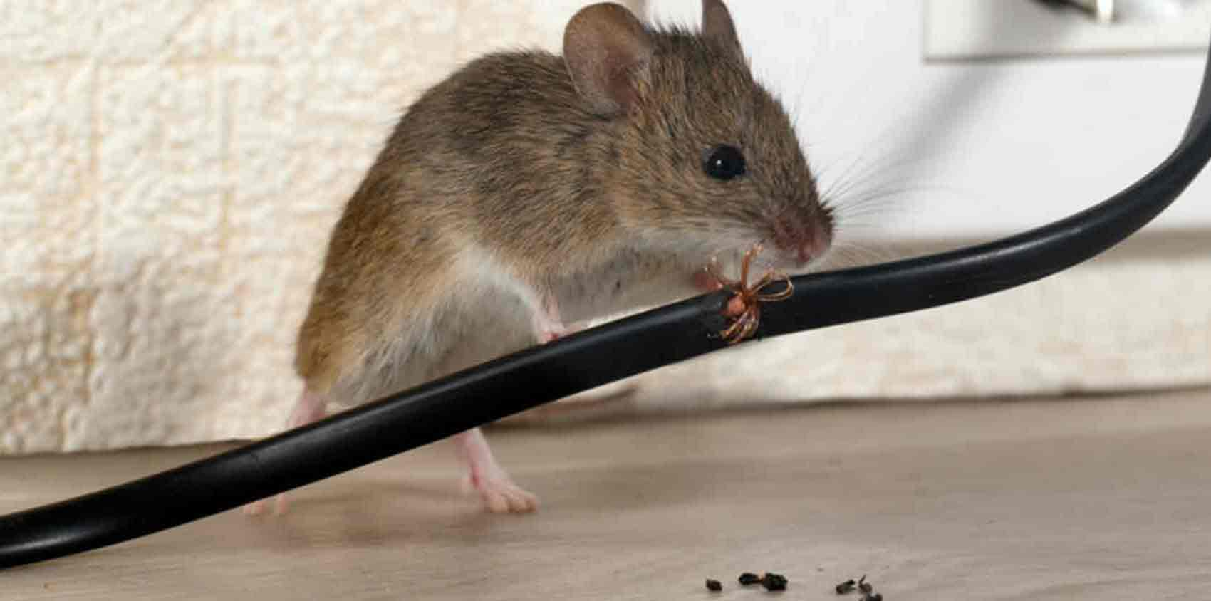 pest-control-copmany-near-me-pest-damage